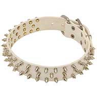 "Collare in cuoio ""Spiked Holiday Collar White"" per Labrador"