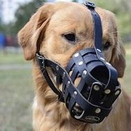 Leggera museruola a cestello in pelle per Labrador Retriever