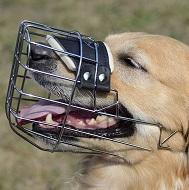 Museruola a cestello in acciaio cromato per Labrador Retriever